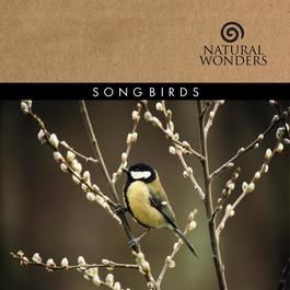 Songbirds 2008 Brian Hardin