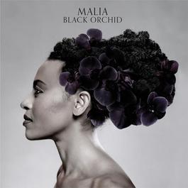 Black Orchid 2011 Malia
