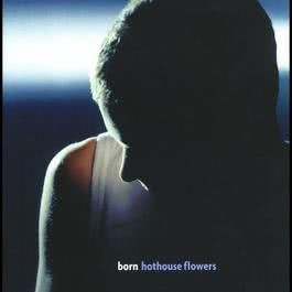 Turn Up the Reverb 2000 Hothouse Flowers
