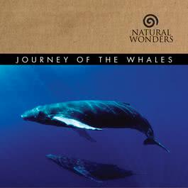 Journey Of The Whales 2006 David Arkenstone
