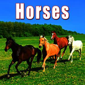 Sound Ideas的專輯Animals: Horses