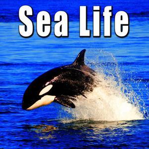 Sound Ideas的專輯Animals: Sea Life