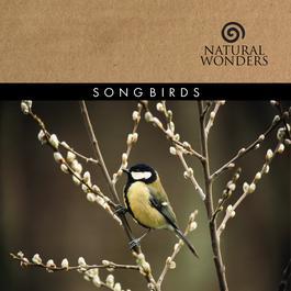 Songbirds 2006 Brian Hardin